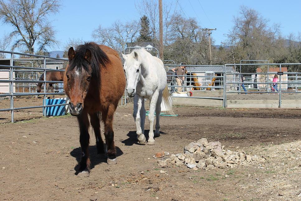 horses36.jpg