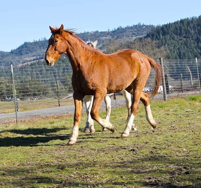 horses41.jpg