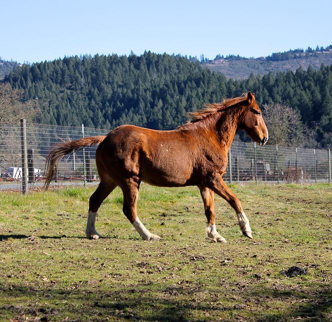 horses43.jpg