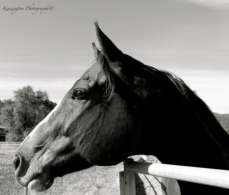 horses48.jpg