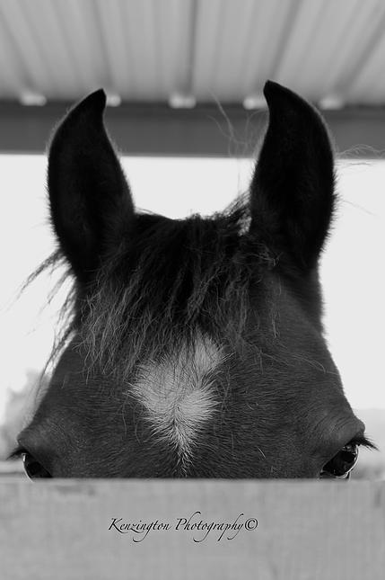 horses53.jpg