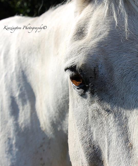horses56.jpg