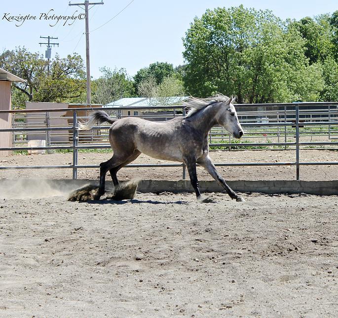 horses57.jpg