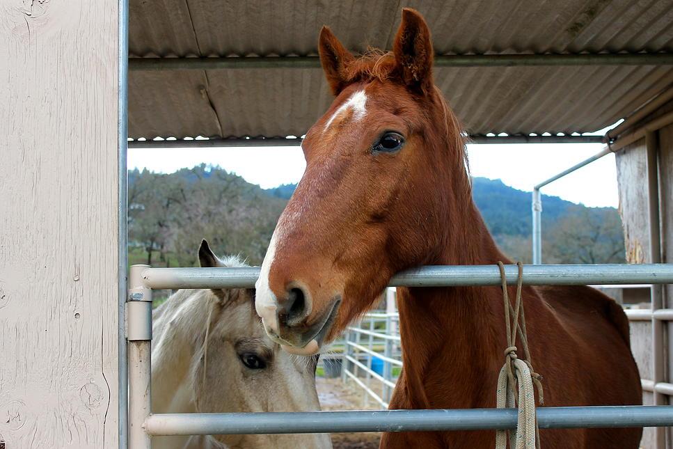horses58.jpg
