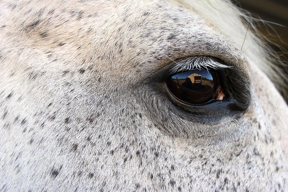 horses62.jpg