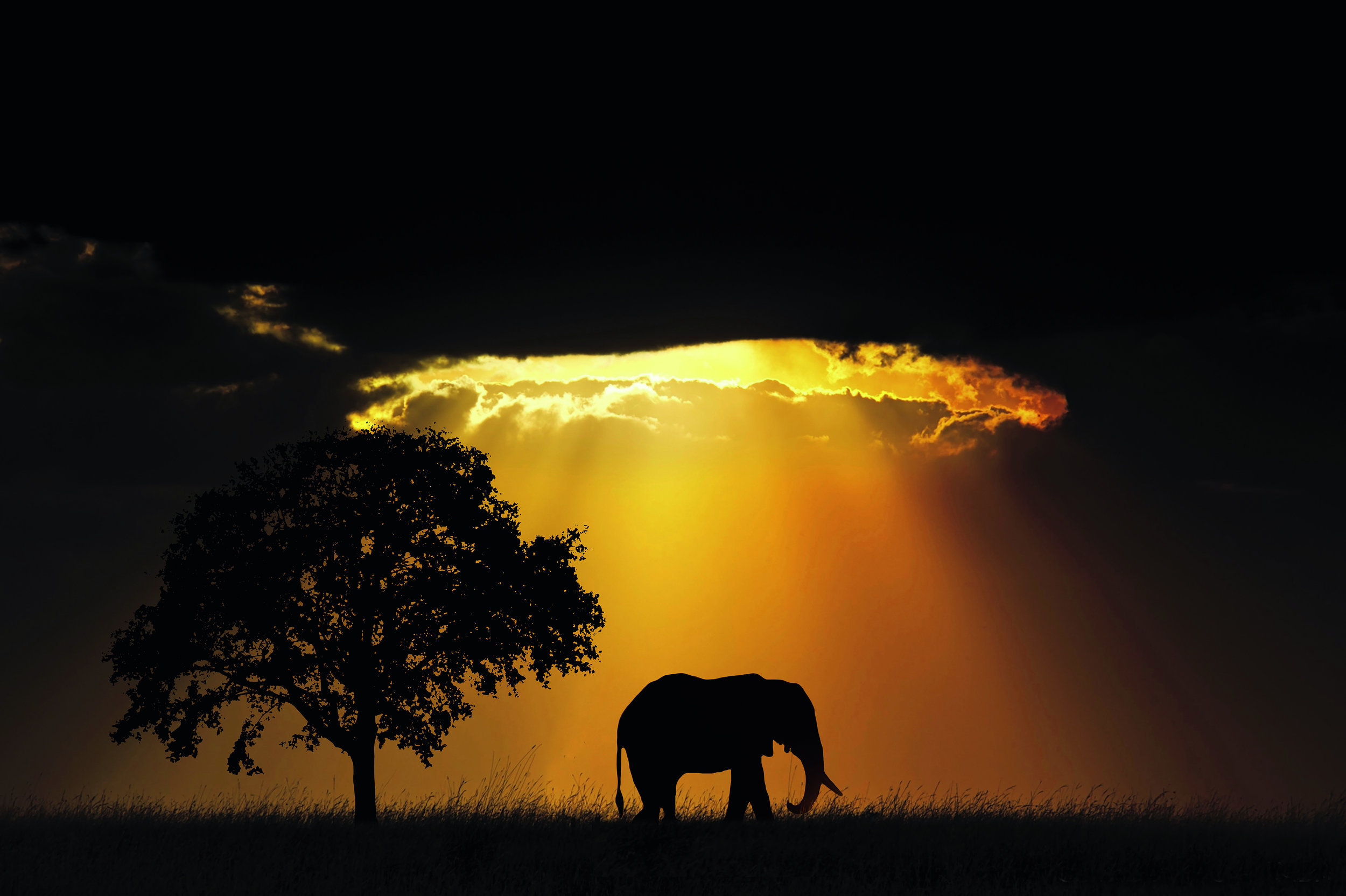MAJESTIC ELEPHANT - RIYA SHARMA AWARD WINNING TRAVEL PHOTOGRAPHER INDIA.jpg