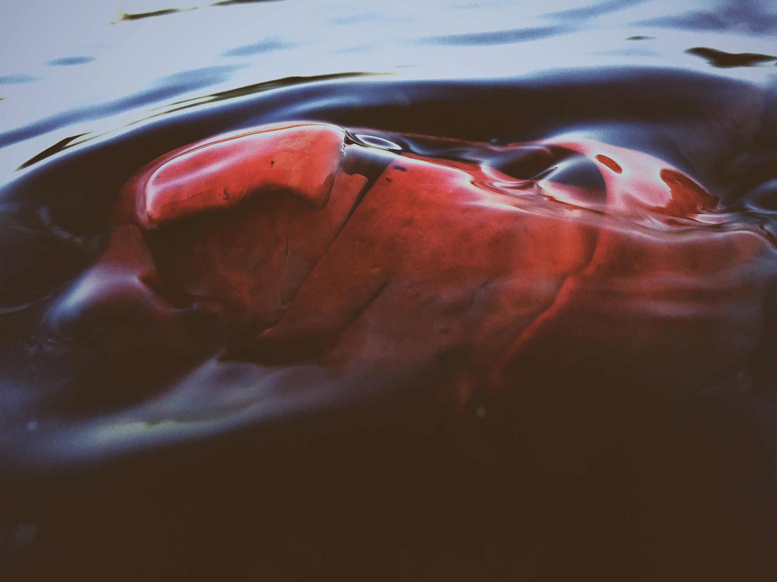 Lobster Heavens, Cliff Kuhn-Lloyd