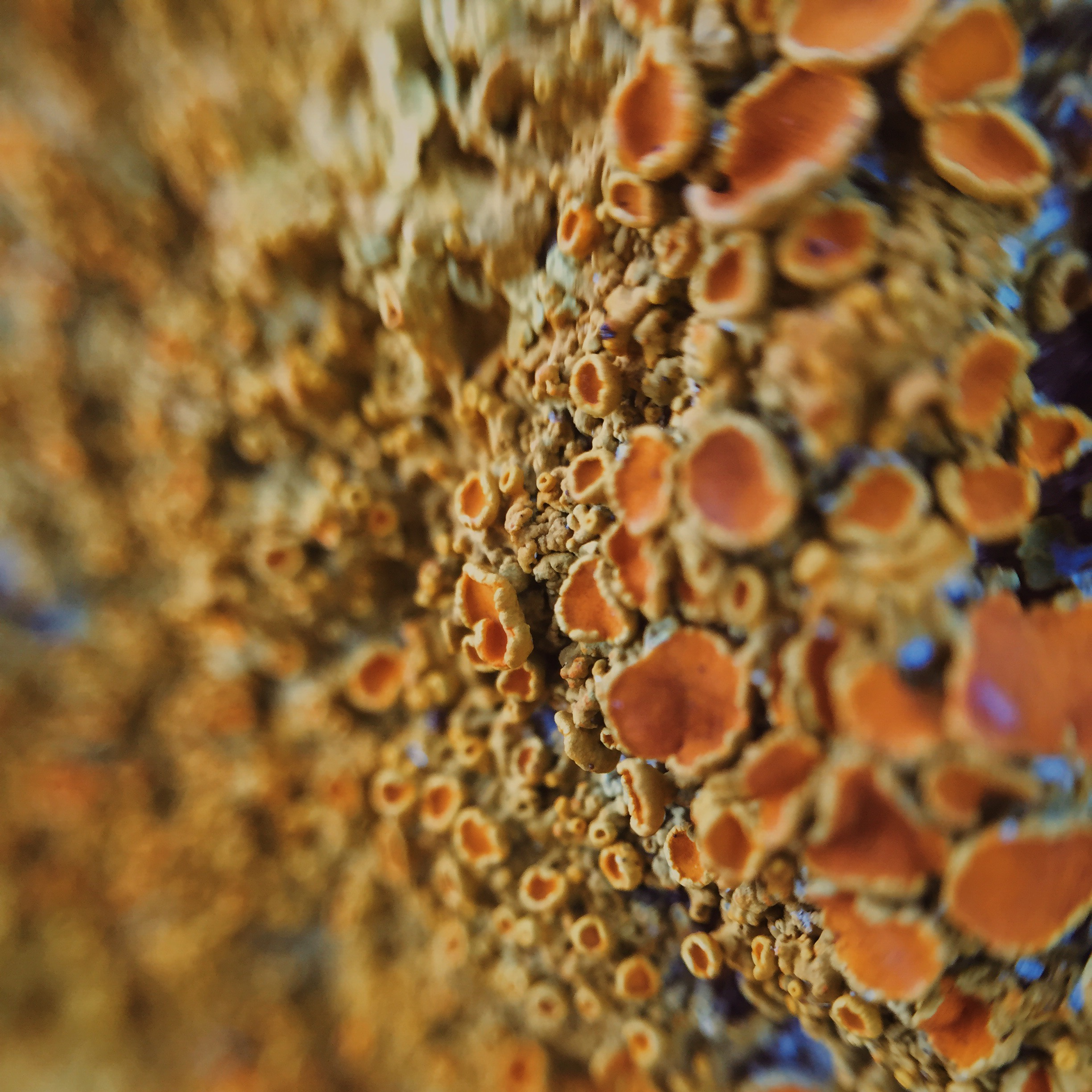 This is what Lichen looks like close up.