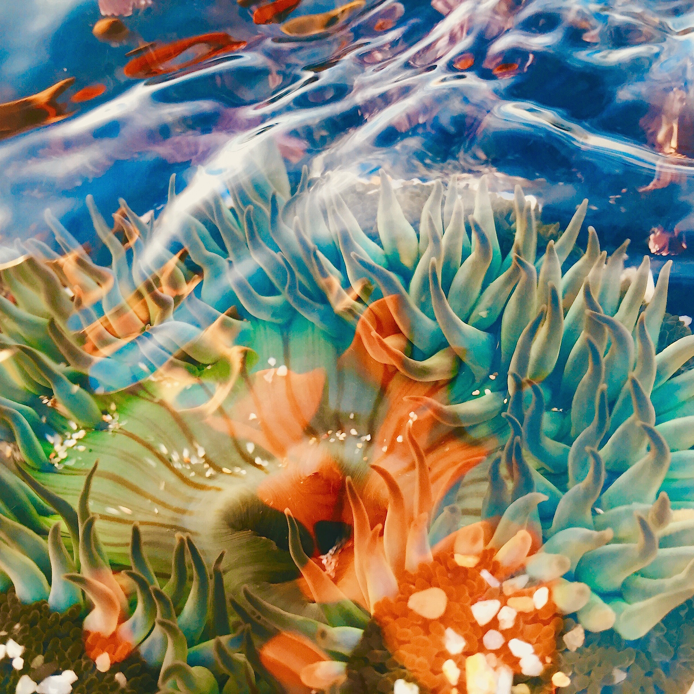 Anemone Painting (Vibrant)
