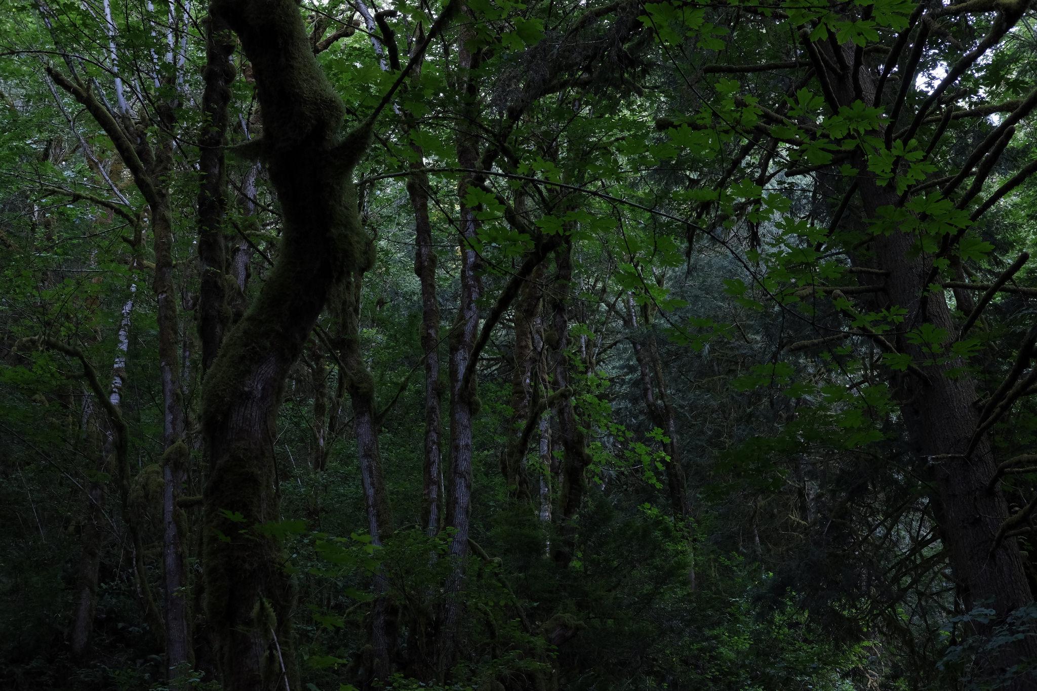 Oxbow Regional Park, Multnomah County, OR. Photo by Ilya Yakubovich/Flikr