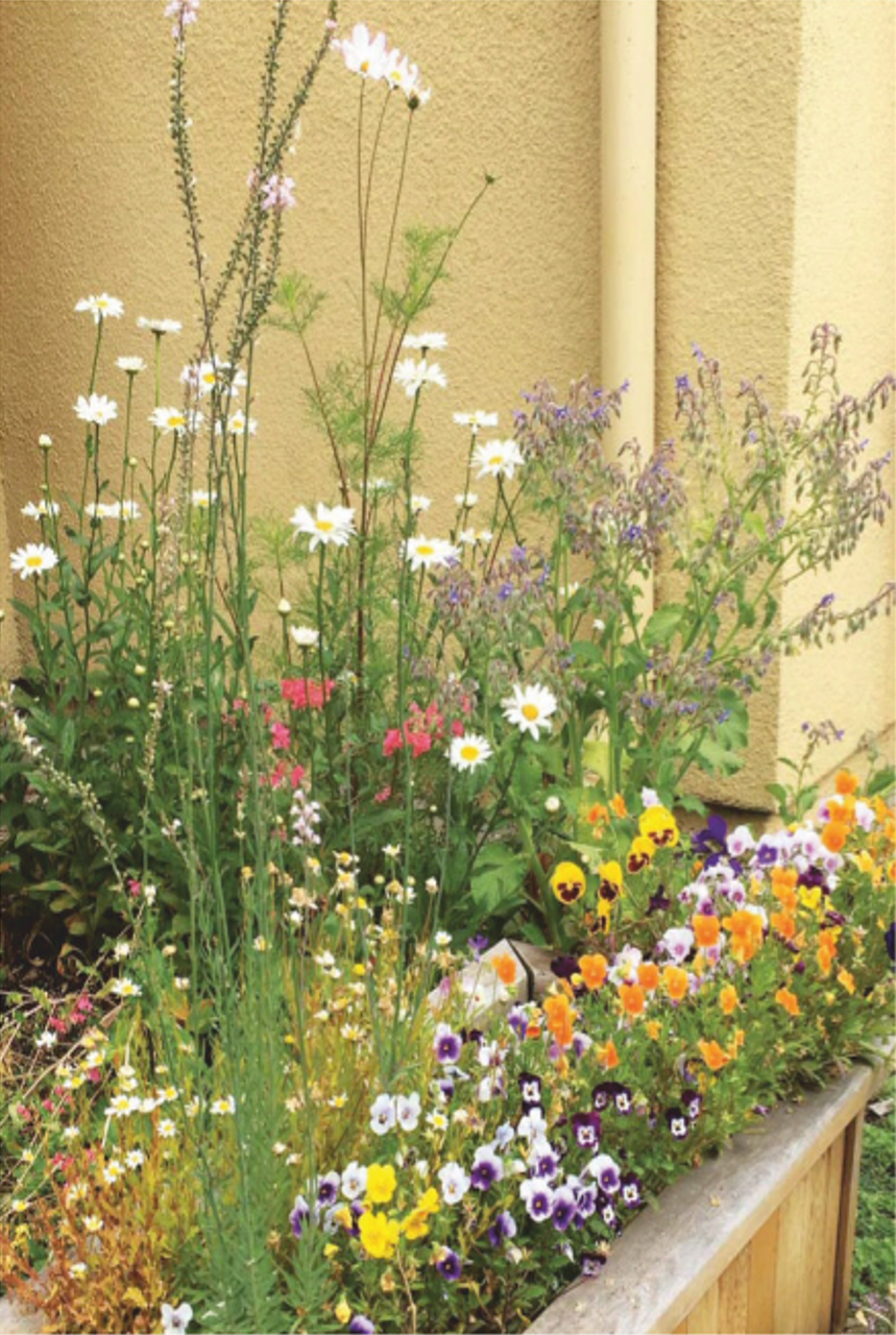 FLOWERS FROM THE GARDEN AT VILLA FAIRMONT MHRC.