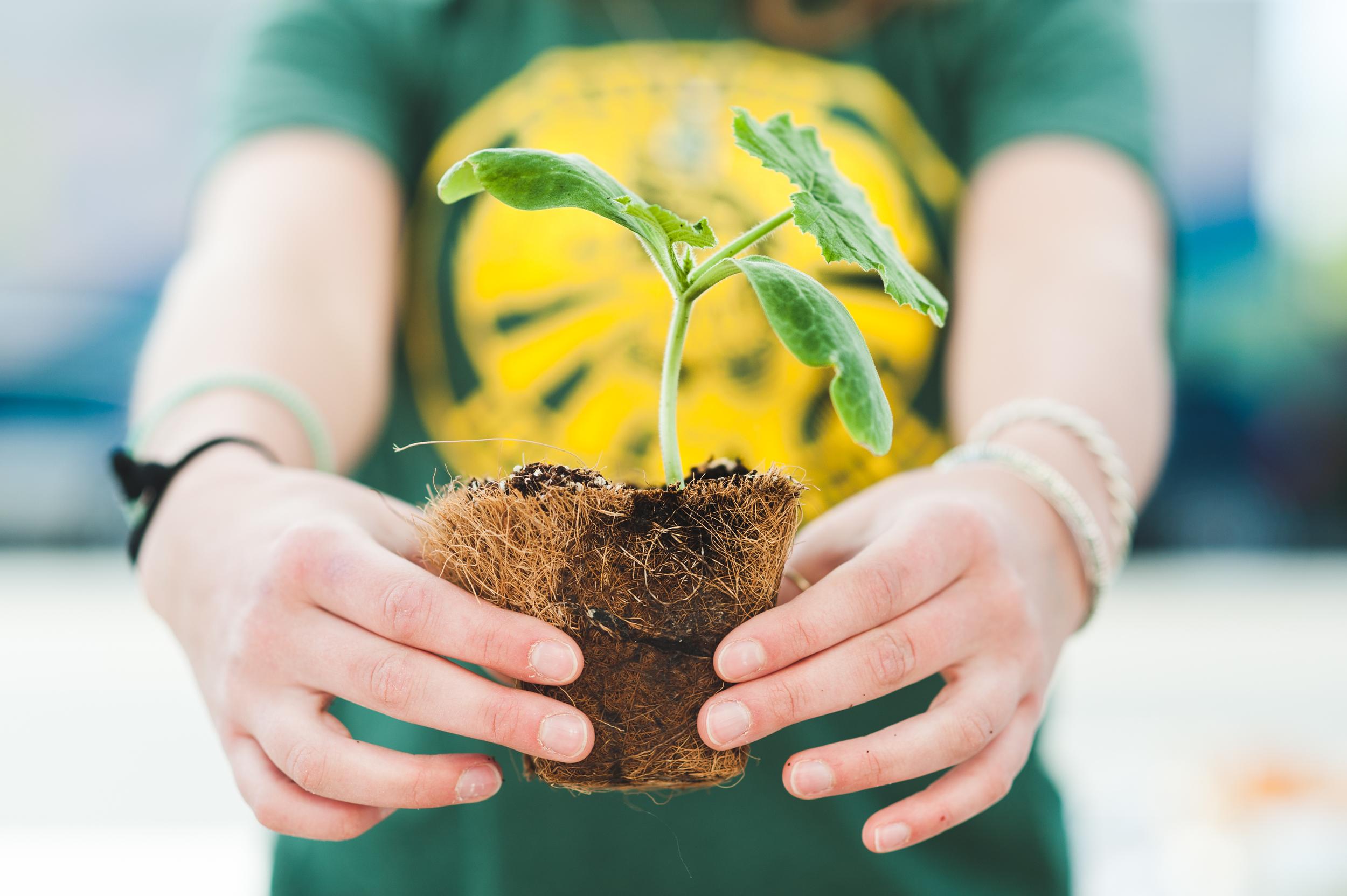 2014 Seedling Sale, Seedlings under grow lights, seedlings with labels, volunteers with Alyssa farming, working in gardens and rows, little girl with seedlings
