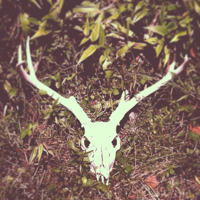 #wcw is this incredibly badass deer skull we fucking FOUND like this on my studio's property. Hail Satan 🙌🐑🐱💀💞 #humpday