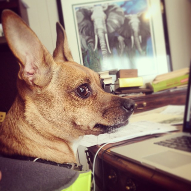 This guy….studio pup. A designer at work 🐾💖🐾💖🐾 #studiopup #puppy #snowday