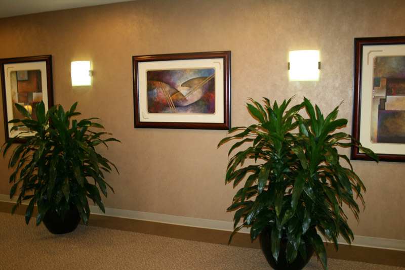 These plants create a great contrasting relationship with the hallway artwork.