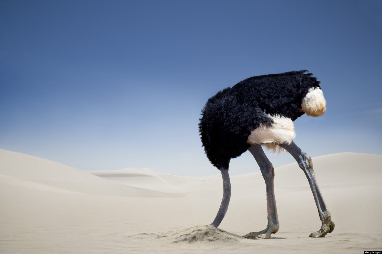 ostrich avoiding fear with head in the sand