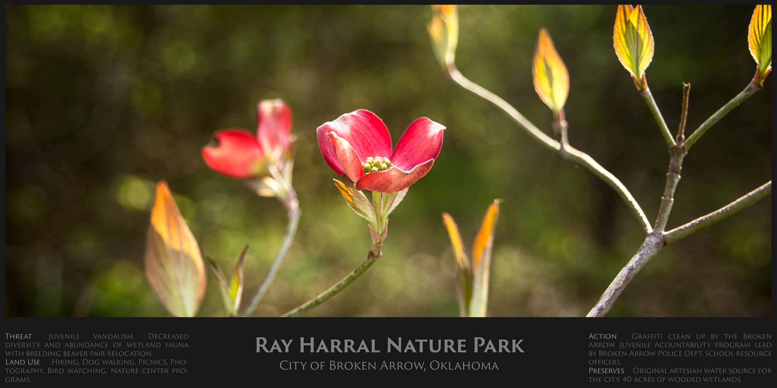 Ray Harral.jpg