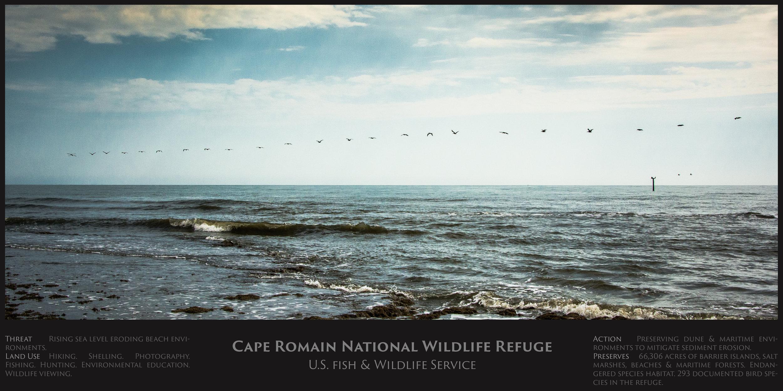 Cape romain.jpg