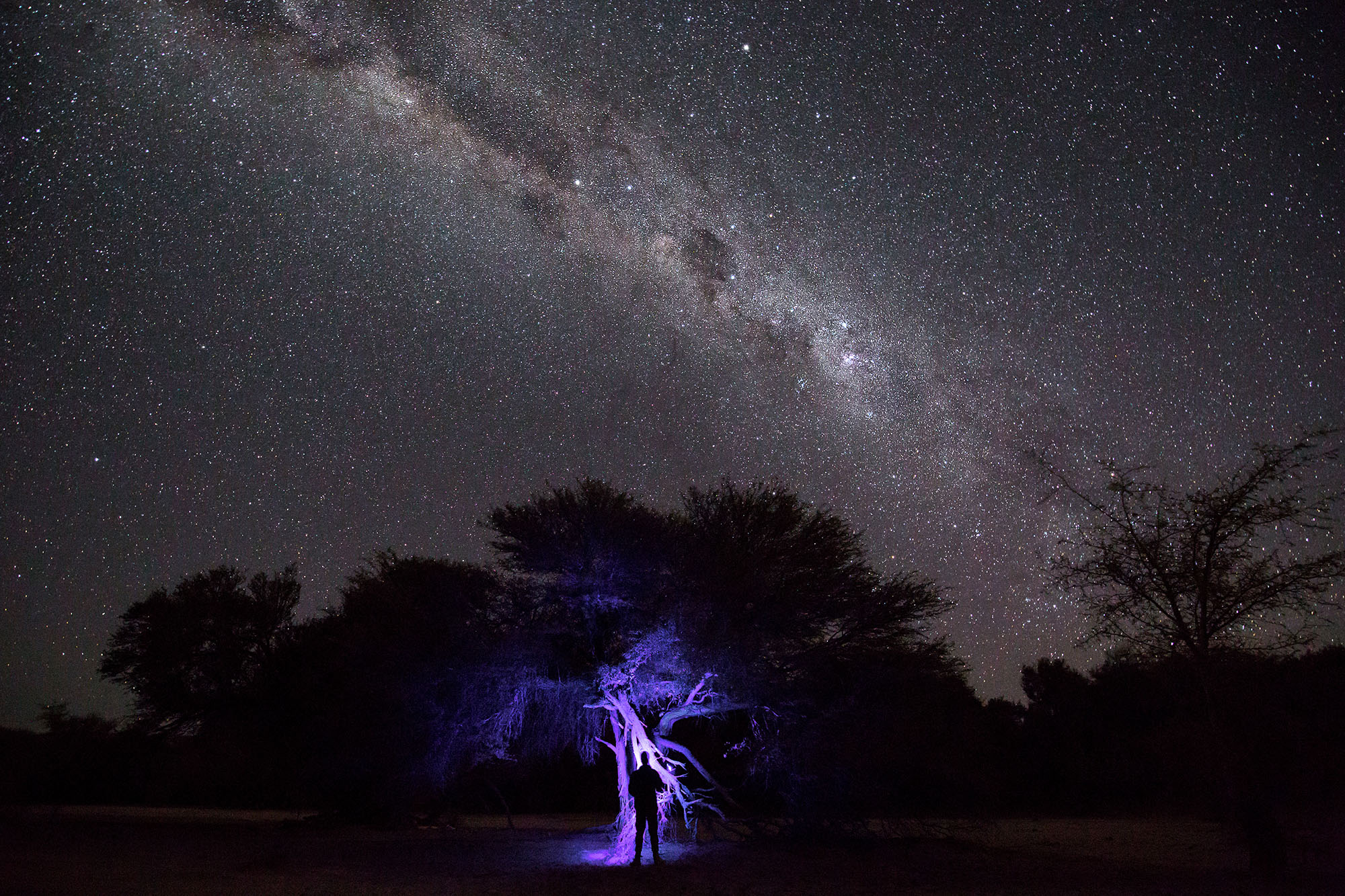 Above:  Searching for fluorescing scorpions with UV light in the Kuiseb River - an ephemeral river that meanders through parts of the Namib Desert.