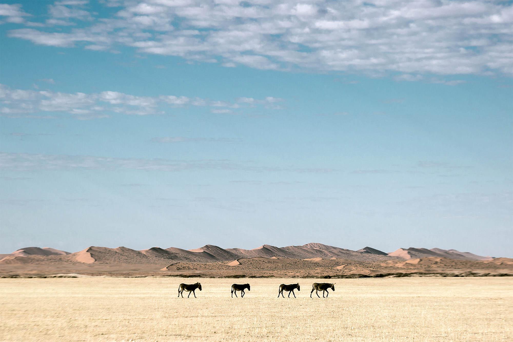 NSS Livestock.jpg