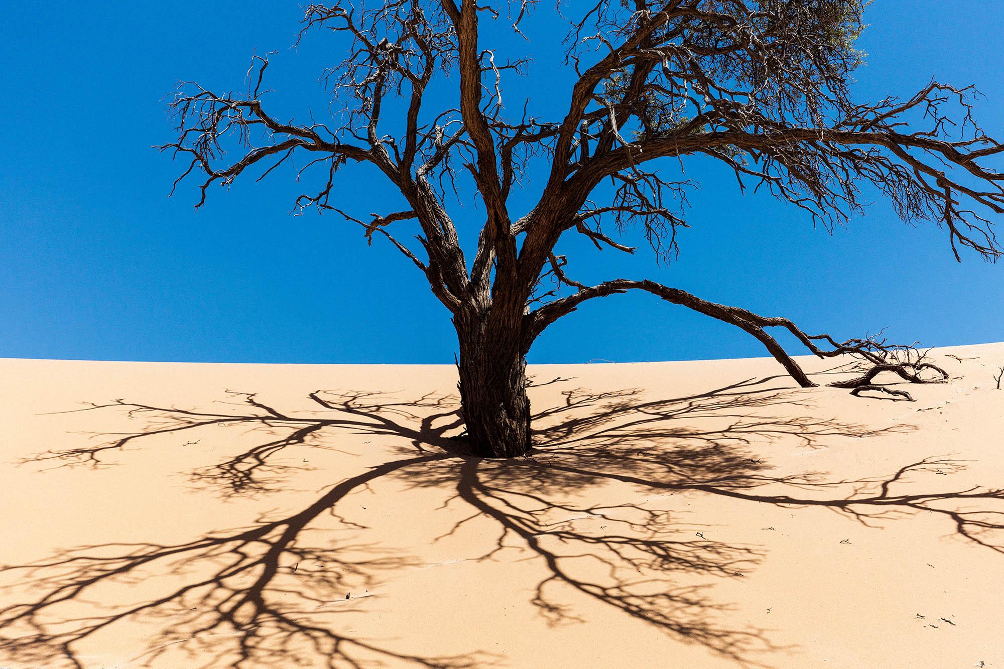 Acacia Kuiseb.jpg