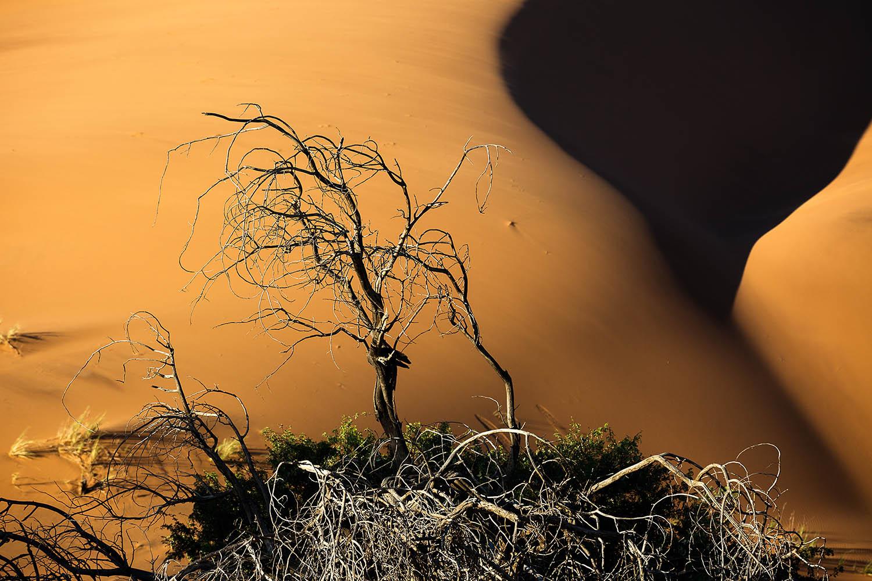 Namib3.jpg