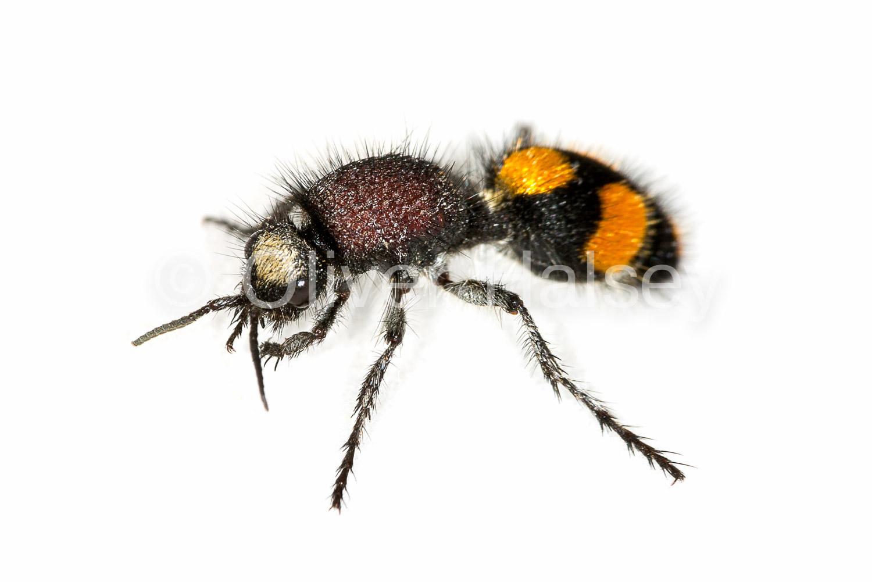 M20.  Wasp