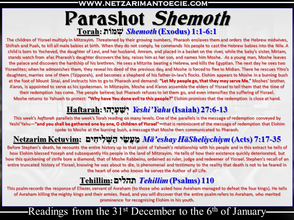 Torah Portion Shemot.jpg