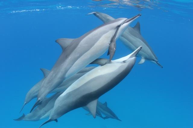 Dolphin-Love.jpeg