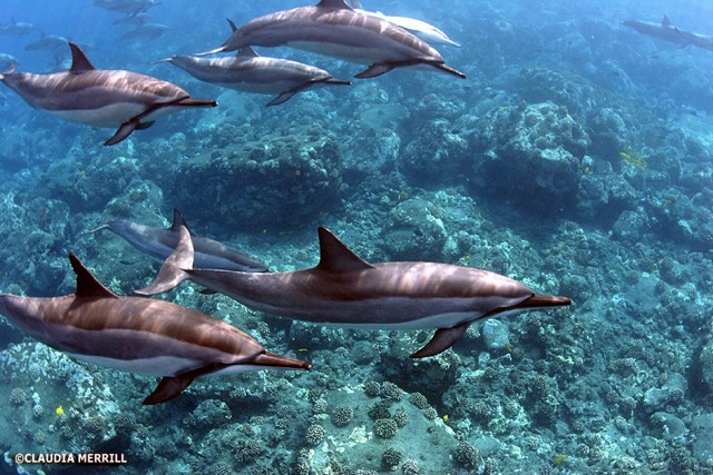 dolphinreef.jpeg