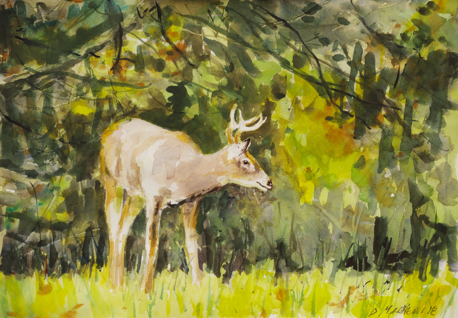 The Young Buck, Frick Park, Pittsburgh