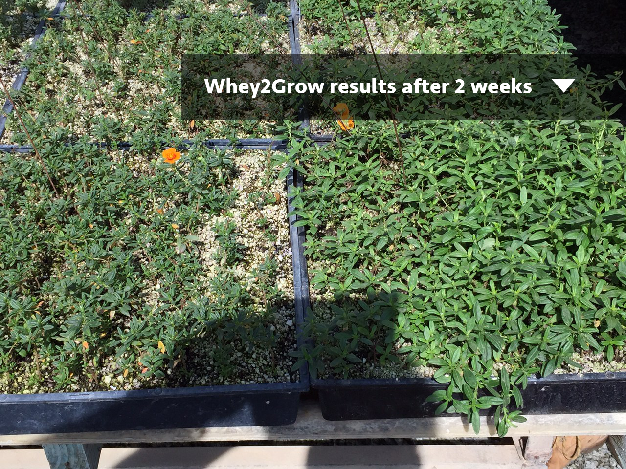 whey2grow_ground-cover.png