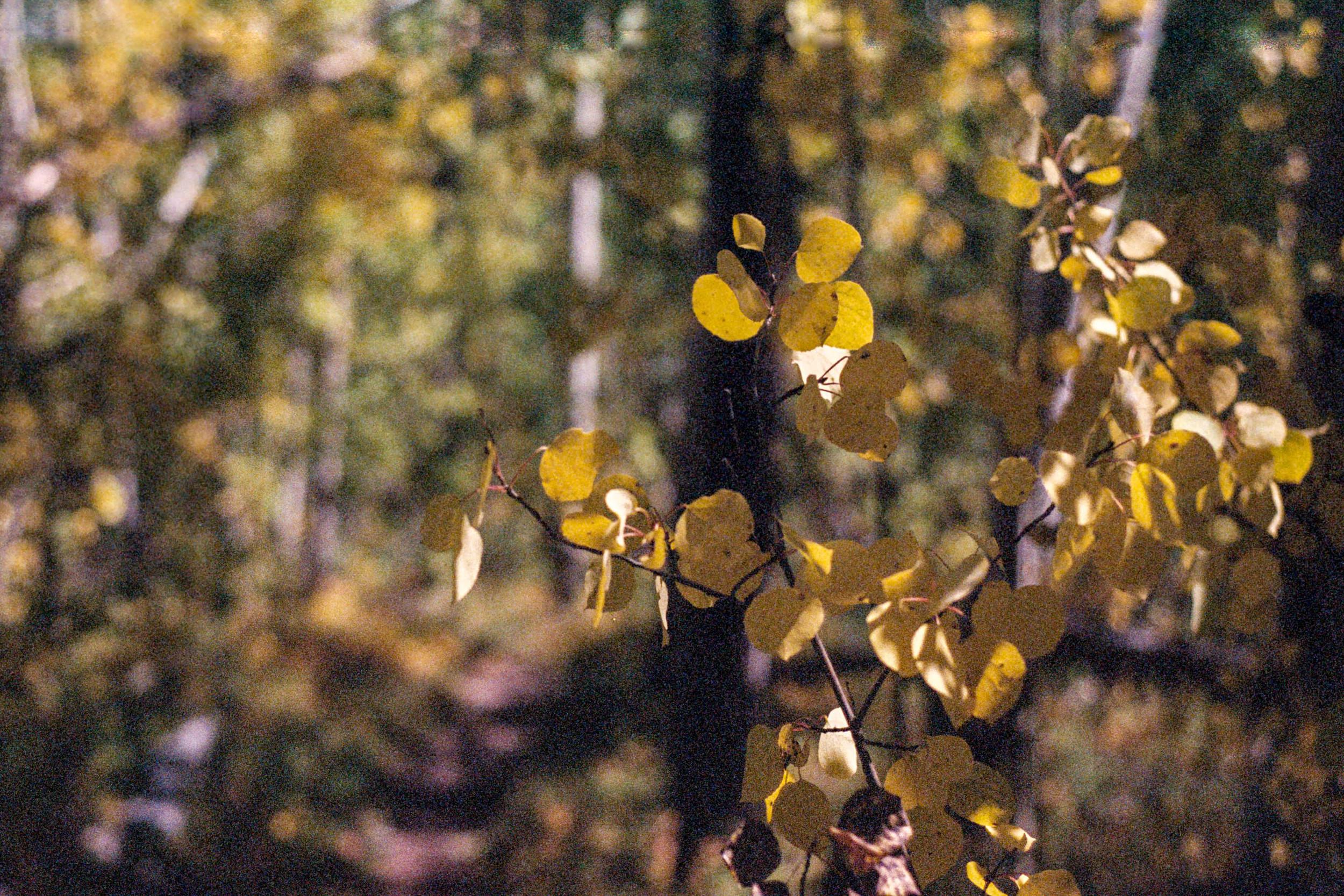 Forrest-2.jpg