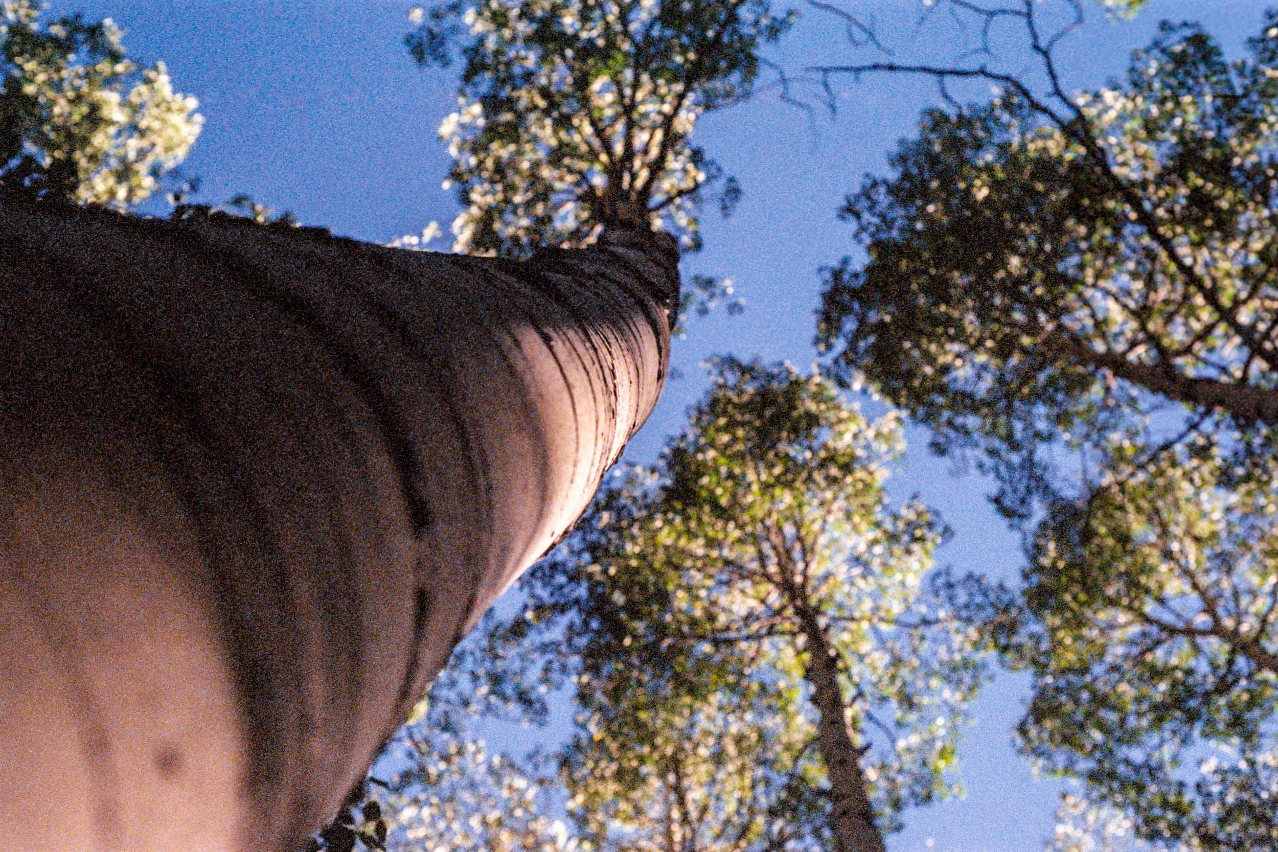 Forrest-4.jpg