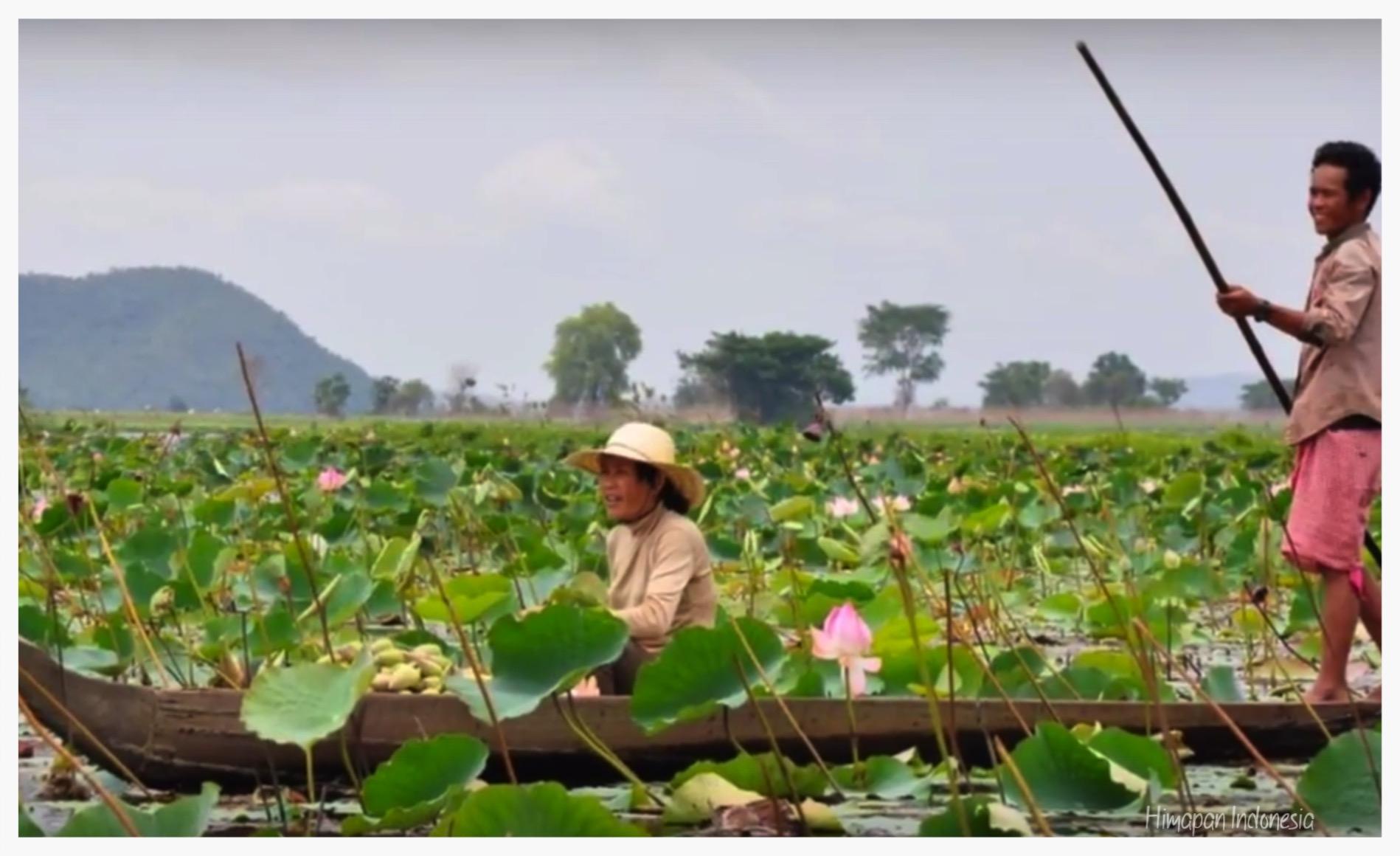 10.  Lotus Farm.jpg