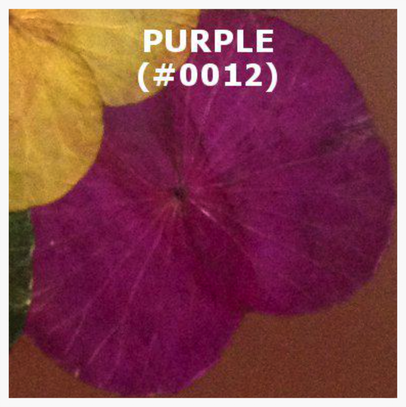 #0012 Purple.png
