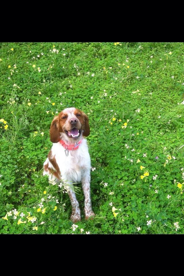 Dog 12 C.jpg