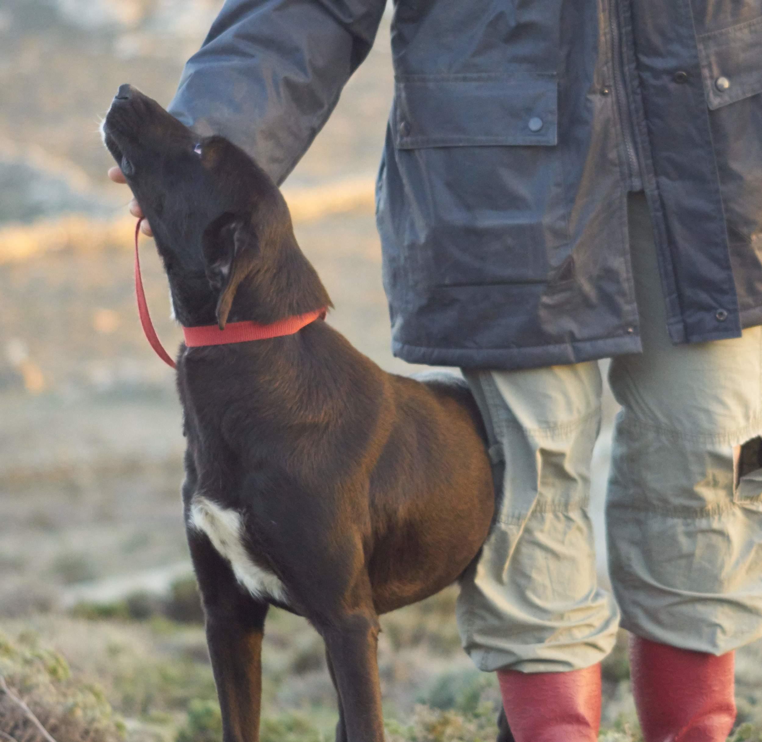 Elsa mix | Mykonos dog rescue and adoption