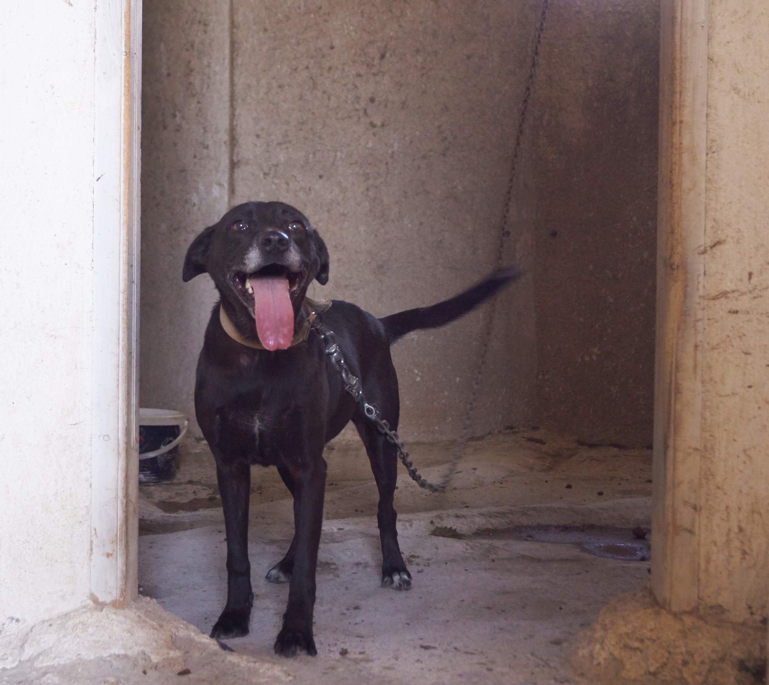 Sugar mix breed | Mykonos dog rescue and adoption
