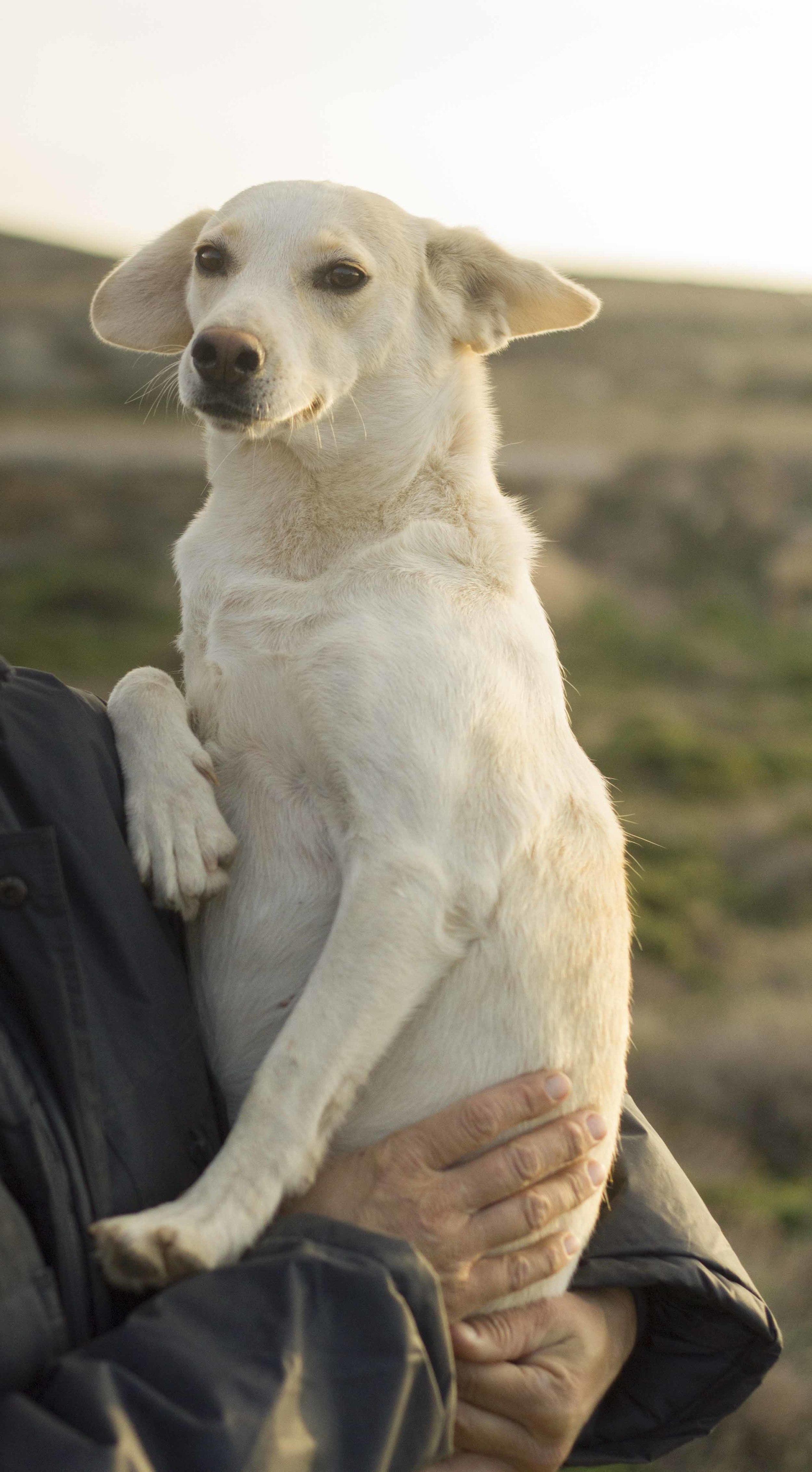 Magdalo mix | Mykonos dog rescue and adoption | Medusa Gallery Athens