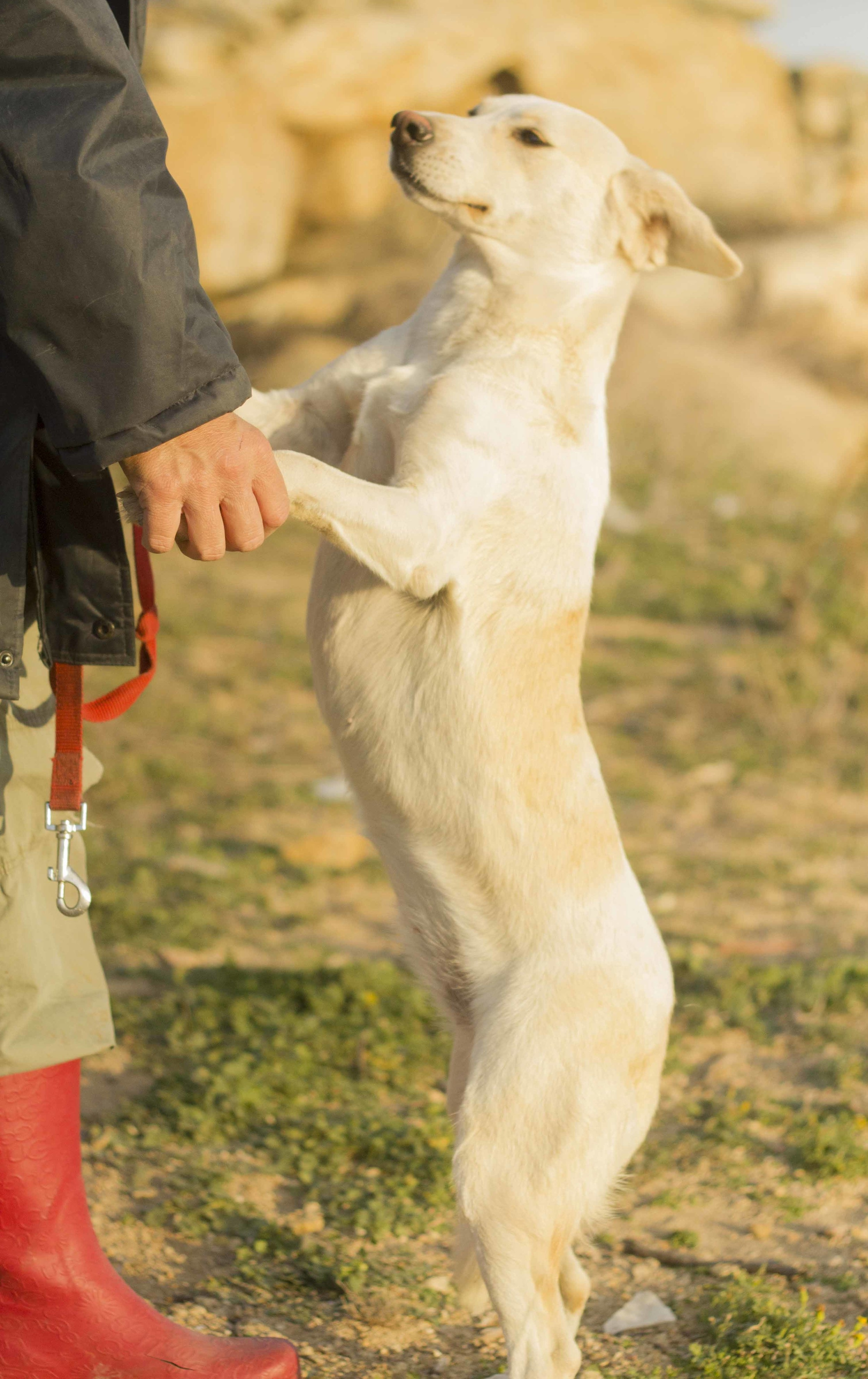 Magdalo mix   Mykonos dog rescue and adoption   Medusa Gallery Athens