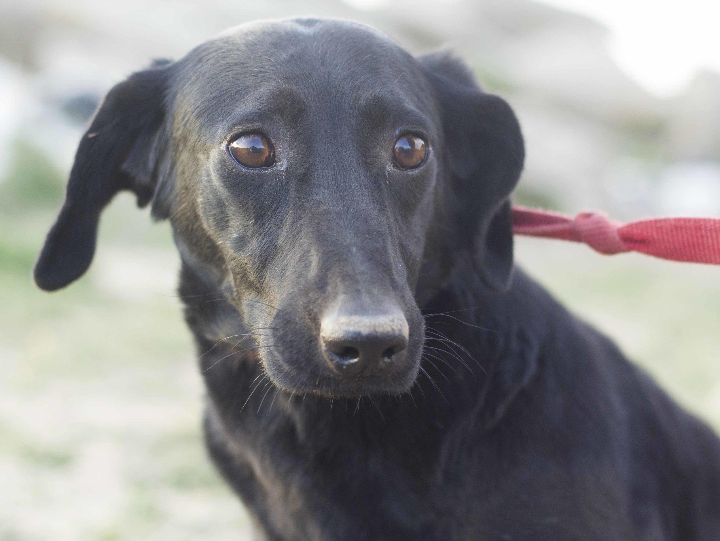 Naomi mix | Mykonos dog rescue and adoption