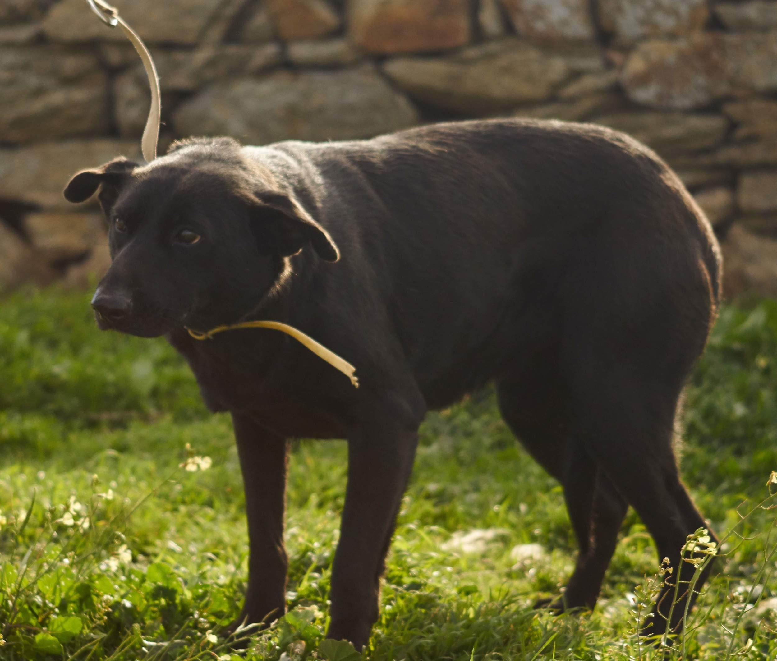 Kostoula mix | Mykonos dog rescue and adoption