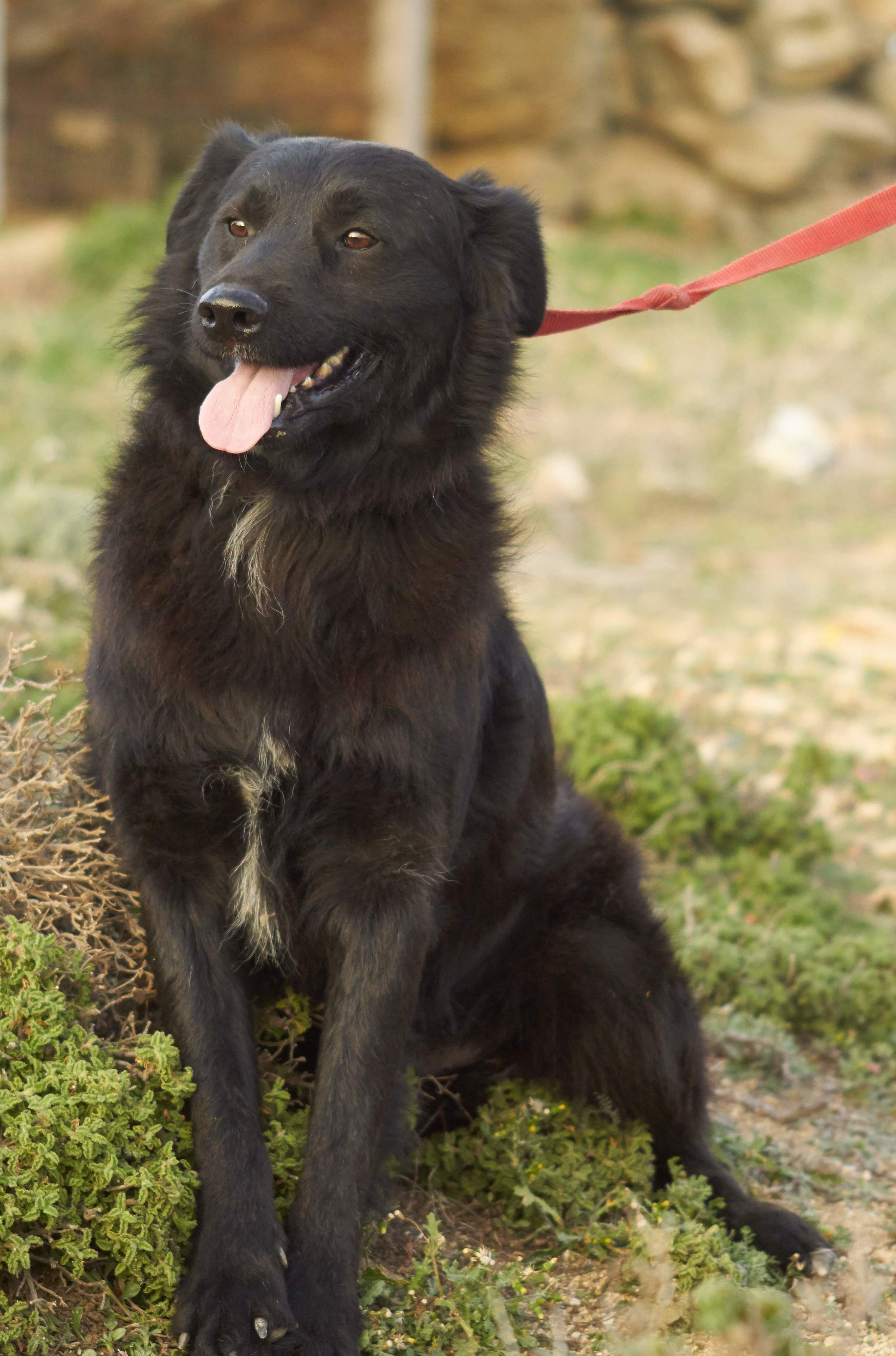 Che mix | Mykonos dog rescue and adoption
