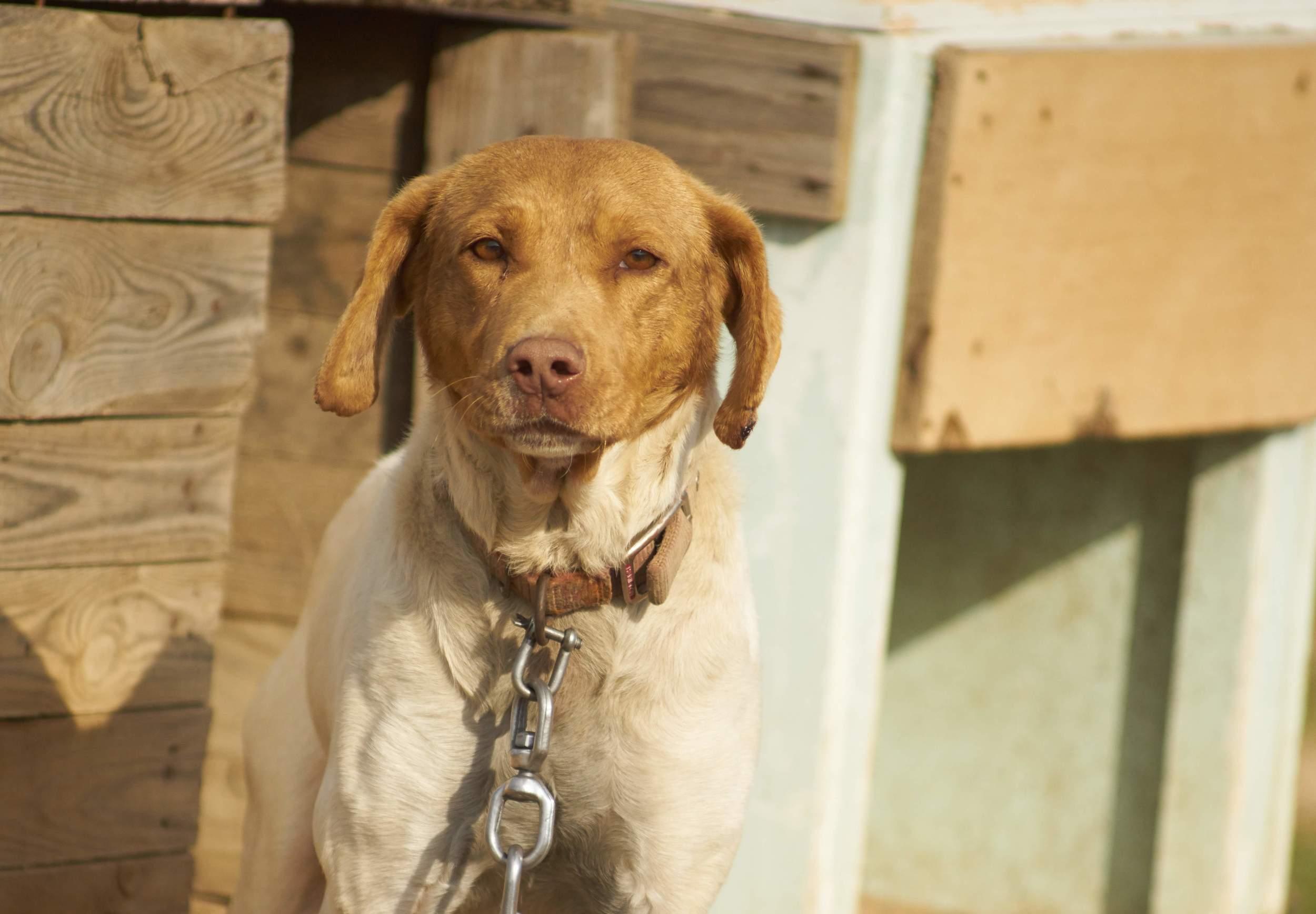 σκυλι με αλλη αλυσιδα8.jpg
