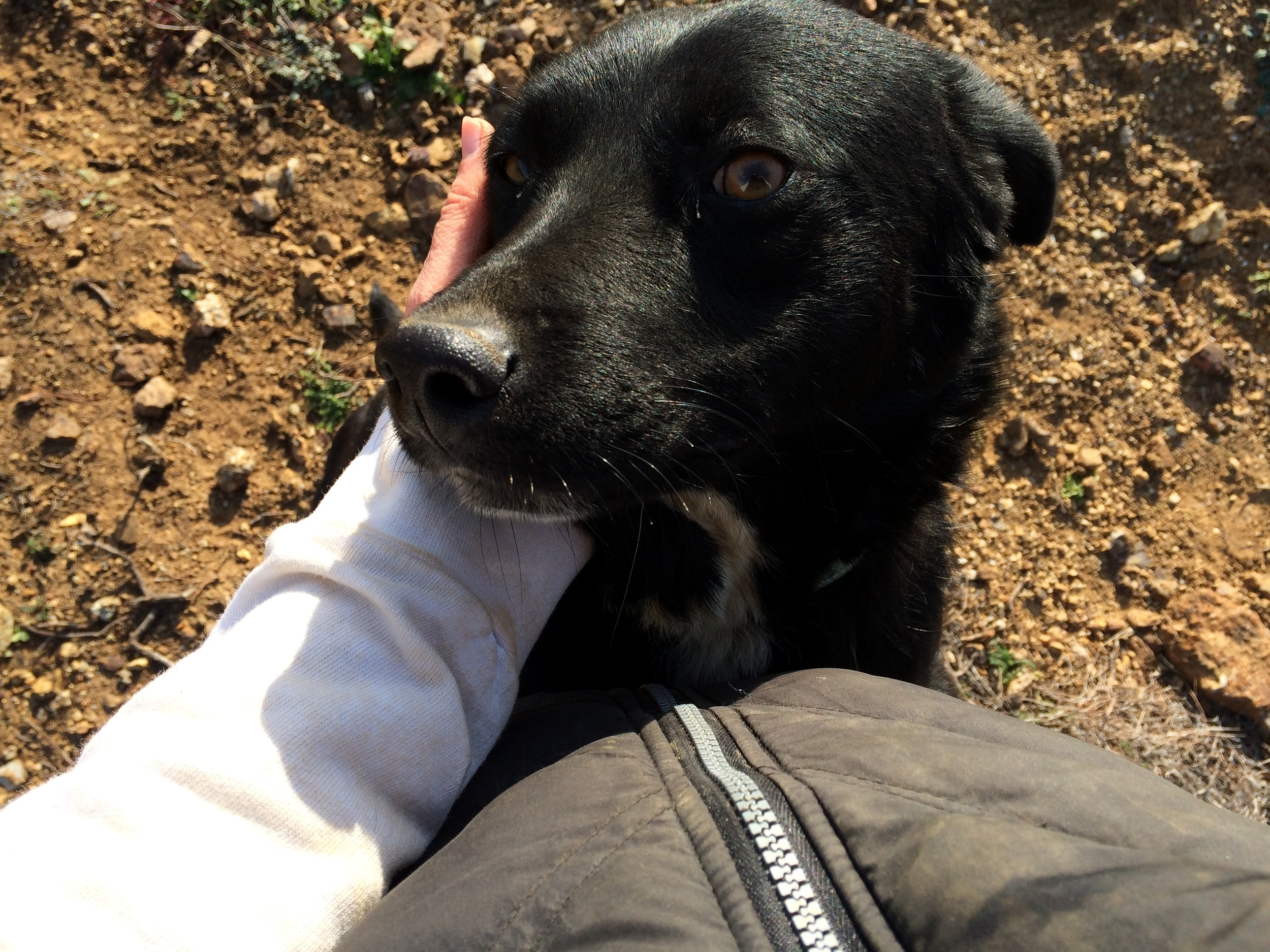 Nicolas mix | Mykonos dog rescue and adoption