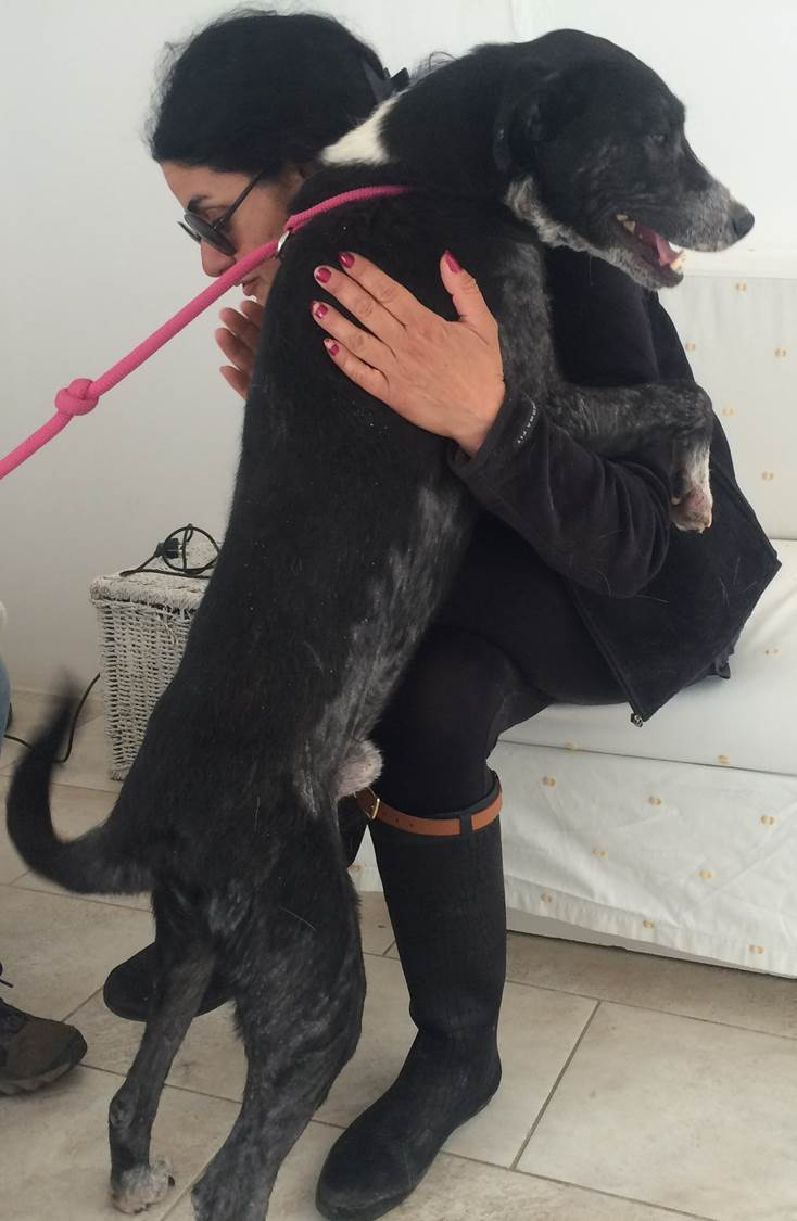 Jack mix | Mykonos dog rescue and adoption | Tina Michalski | Atlantida Angeli