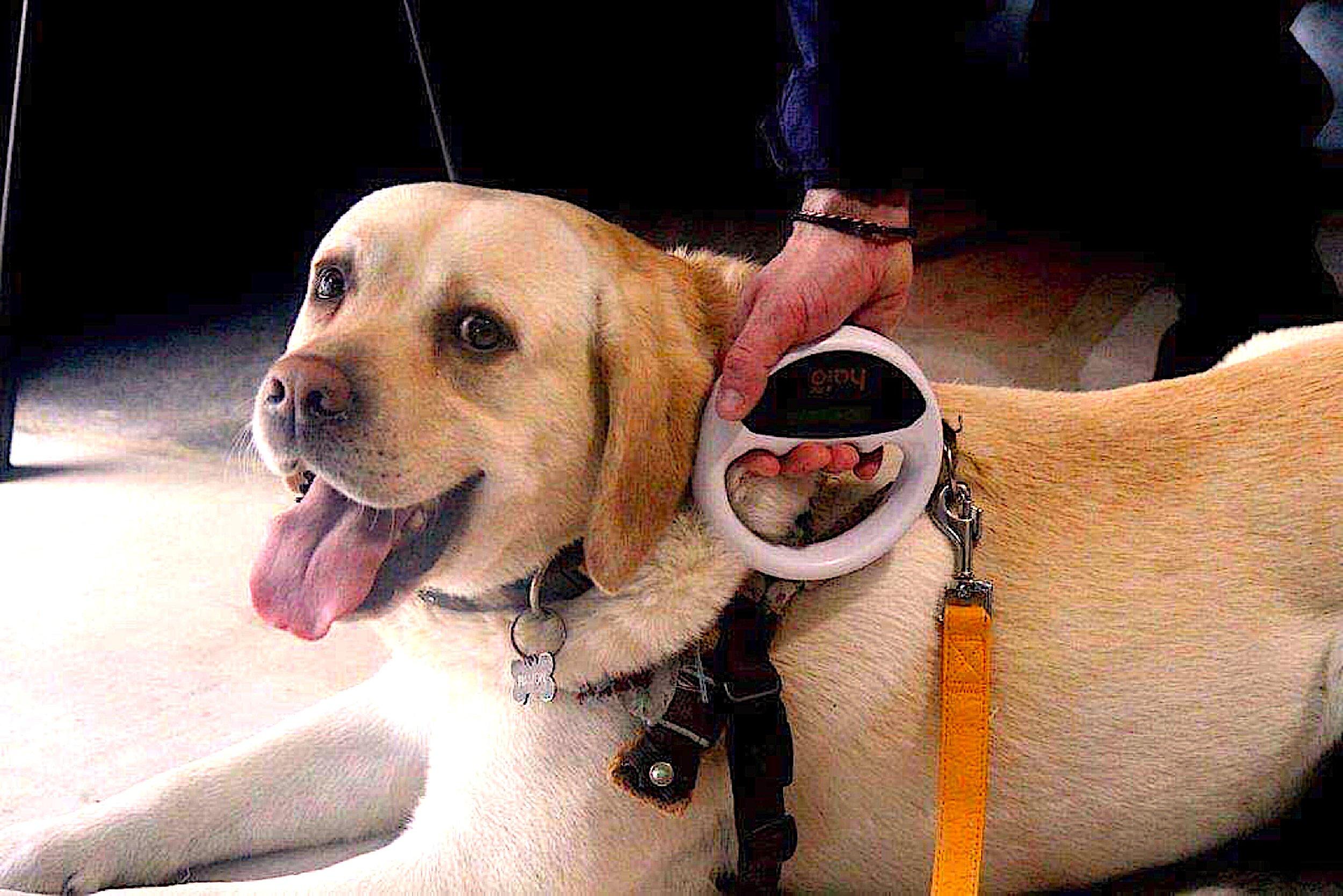 Dog microchipping.JPG