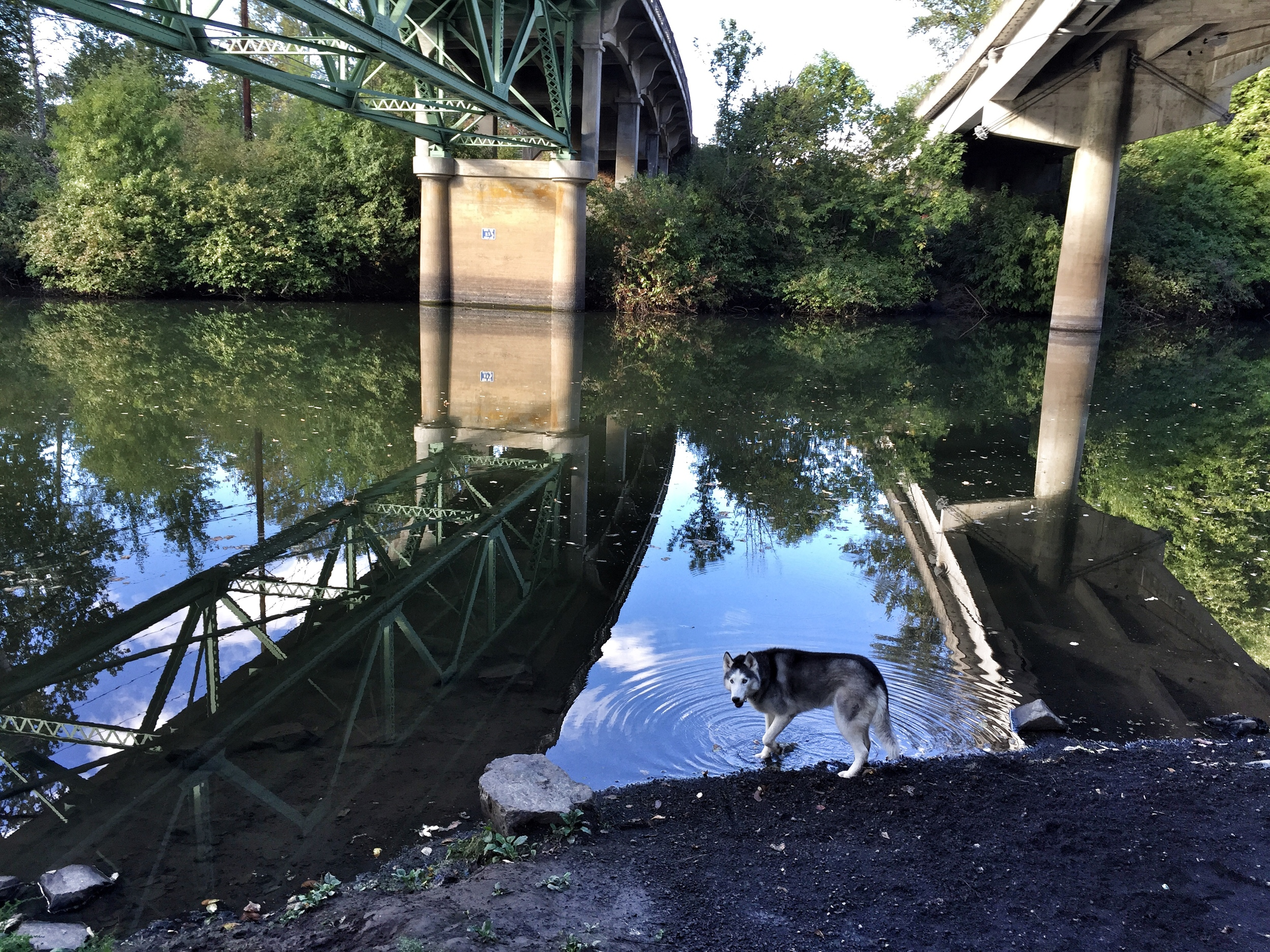 inga along the tualatin
