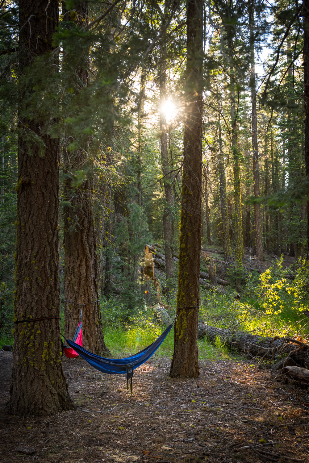 The perfect hammock spot